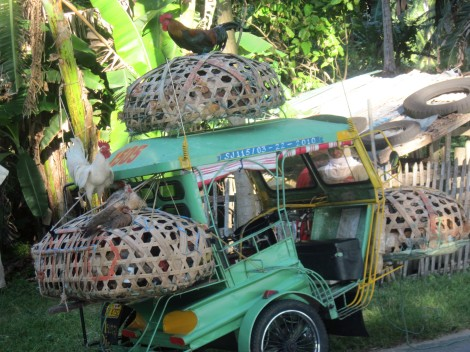 These wonders of the modern transportation world can carry up to 11 people- or about 50 chickens.