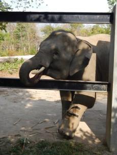 Tamao Wildlife Park, Cambodia