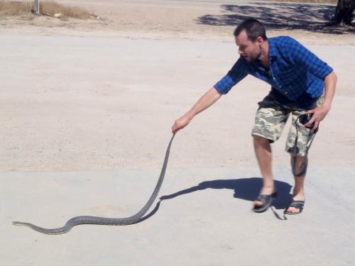 Carpet Python, Nundroo, South Australia