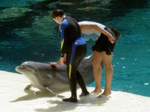 Dolphin Training, The Mirage, Las Vegas