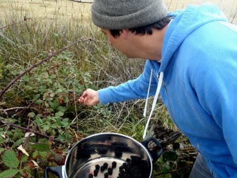 Australian cuisine, bush blackberries