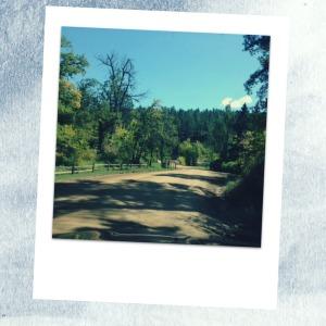 polaroid, discover home